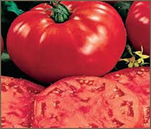 25 Seeds Giant!! Beefsteak Tomatoes!! Huge and Great Tasting.. (Tomato Giant)