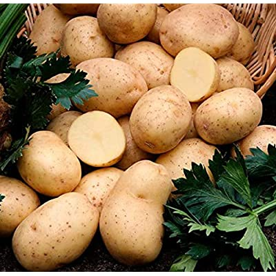 KOUYE GardenSeeds- 20pcs Gold Potatoes Seeds for Planting Nutrition Green Vegetables Home Garden Farm Plant Flowers : Garden & Outdoor