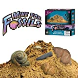 Discover with Dr. Cool Mine for Fossils Science Kit