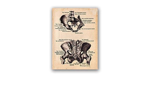 Anatomía de la cadera humana Impresión retro Guía de tratamiento manual Cartel Médico Arte de la pared Pintura de la lona Decoración 50x70cm: Amazon.es: Bricolaje y herramientas