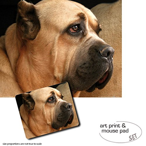 Set Impresión Regalo: 1 Póster Impresión Set Artística (50x40 cm) + 1 Alfombrilla para Ratón (23x19 cm) - Perros, Cane Corso, Mastín Italiano 3c27f2