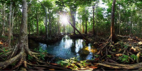 (20 x 10 ft Swamp Forest Photography Backdrop Mangrove Trees River Water Tropical Nature Scene Stage Background Photo Booth Studio)