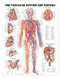 Vascular System and Viscera Anatomical Chart, Anatomical Chart Company Staff, 1587797003