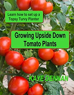 Growing Upside Down Tomato Plants Learn How To Set Up A Topsy Turvy
