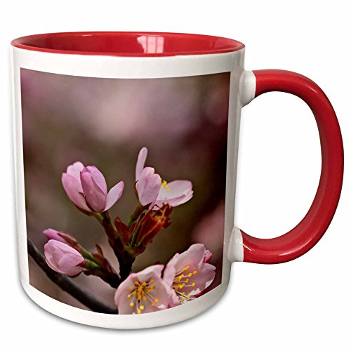 3dRose Alexis Photography - Flowers Sakura Beautiful - Rich pink sakura flowers against the brown and pink background - 11oz Two-Tone Red Mug (mug_286518_5) ()