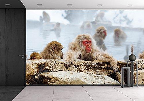Japanese Macaque Monkeys in Bath