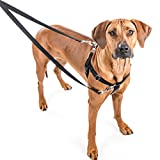 2 Hounds Design Freedom No-Pull Dog Harness Training Package, Medium (1'' wide), Black