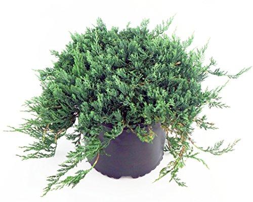 juniper blue rug - 8