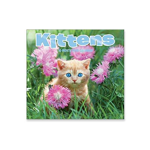 16 Month Wall Calendar 2019: Kittens - Each Month Displays Full-Color Photograph. September 2018 to December 2019 Planning Calendar