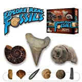 Explore Real Fossils Beginner Science Kit