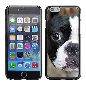 Be Good Phone Accessory // Dura Cáscara cubierta Protectora Caso Carcasa Funda de Protección para Apple Iphone 6 // French Bull Terrier American Bulldog