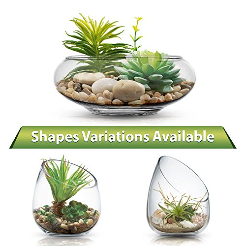 - Zeesline Clear Glass Terrarium Vase, Planter Bowl with Succulents and Decorative Stones - Decorative Centerpiece (Straight Cut, Top Opening)