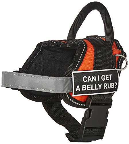 Dean & Tyler DT Works Fun Harness Can I Get A Belly Rub? Pet Harness, XX-Small, Fits Girth Size 18-Inch to 21-Inch, Orange/Black