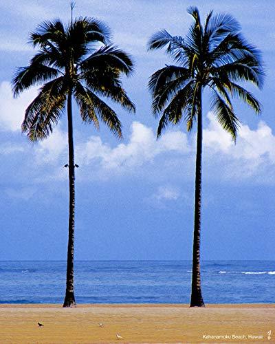 Amazon Com Photograph Print Landscape Scenery Kahanamoku Beach Palm Tree Sea Honolulu Hawaii Handmade