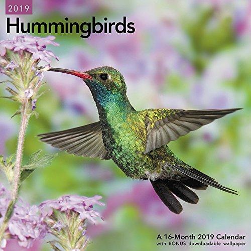 Hummingbirds Wall Calendar (2019) - Hummingbird Wings