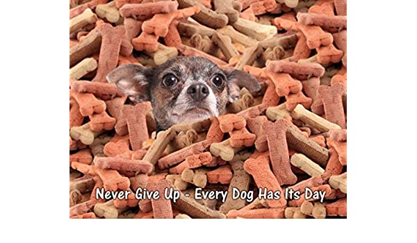 Dog Motivational Poster Art Print Chihuahua Veterinarian Gifts Collar  MVP472