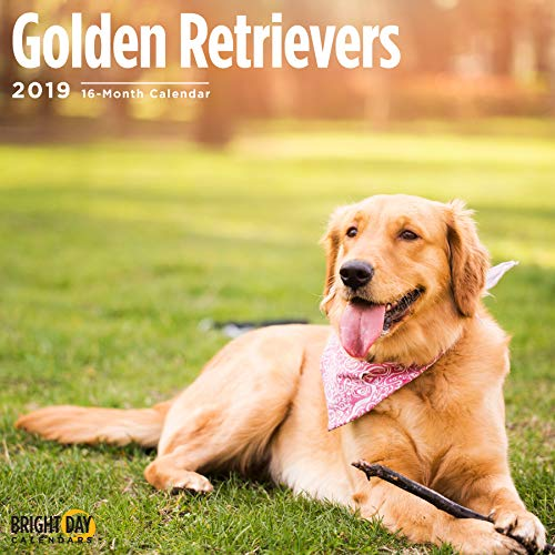 Retriever and Lab Collection by Bright Day Calendars 16 Wall Calendar 12 x 12 Inches (Golden Retrievers 2019)