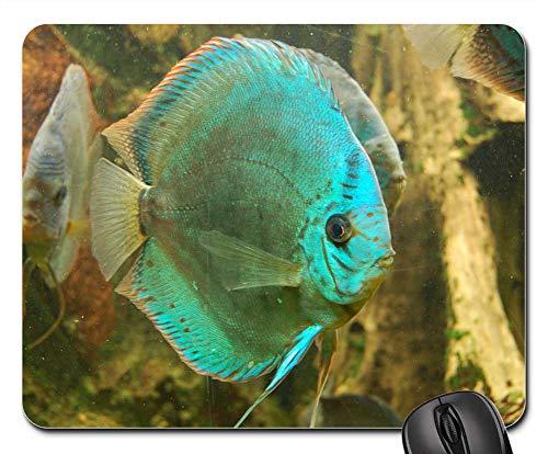 Mouse Pad - Discus Cichlid Fish Aquarium Swim Water