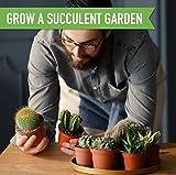 Cactus Succulent Seed Starter Kit - Indoor Garden