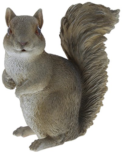 Cheap Border Concepts Nature's Gallery Pet Pals (Grey Squirrel)