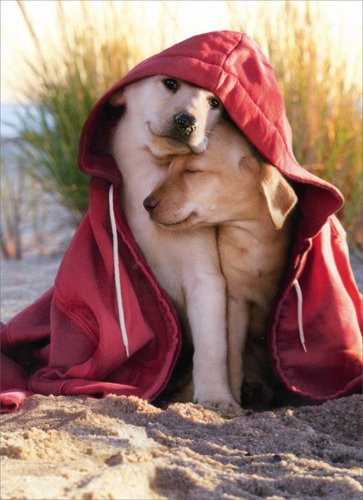 Dogs In Hoodie - Avanti Dog Valentine's Day Card