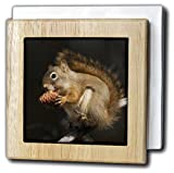 Danita Delimont - Squirrels - Red Squirrel Eating Pine Nut - 6 inch tile napkin holder (nh_228436_1)