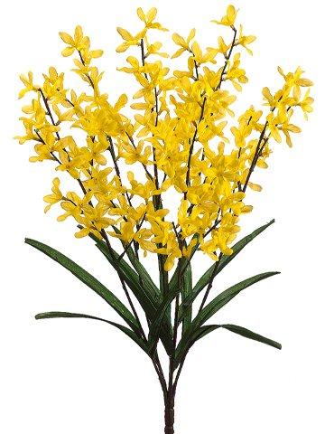 23-Forsythia-Bush-x6-Yellow-Pack-of-12