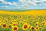 Laeacco Endless Sunflower Field Scenic Backdrop 10x6.5ft Vinyl Boundless Flower Field Grassland Blue Sky Cloud Photography Background Bride Groom Wedding Portrait Shoot Bride Shower Banner Wallpaper