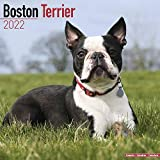 Boston Terrier Calendar - Dog Breed Calendars
