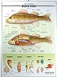 Bony Fish Poster, Raised Relief