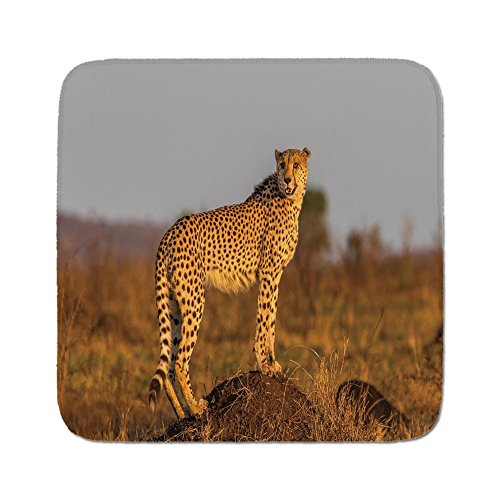 Cozy Seat Protector Pads Cushion Area Rug,Safari,African Wild Animal Cheetah Standing on Termite Mound Savannah Nature View Decorative,Ginger Apricot Dust,Easy to Use on Any Surface