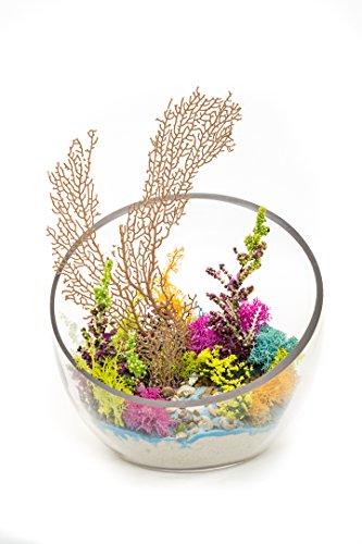 "Air Plant Terrarium Kit | Ocean Series The Reef | Complete Tillandsia Gift Set | 6"" Slanted Glass Bowl | Nautical Crush Trading TM"