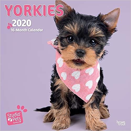 Yorkies 2020 Square