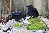Twin Baby Steel Crows or Ravens Welded Sculpture