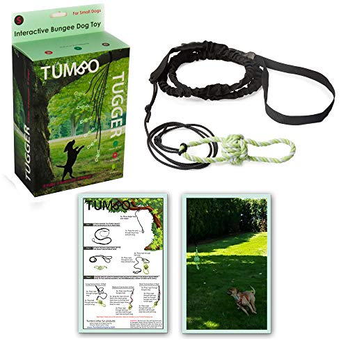 Small Tumbo Tugger outdoor hanging bungee dog toy by Doggie Bungee Toy