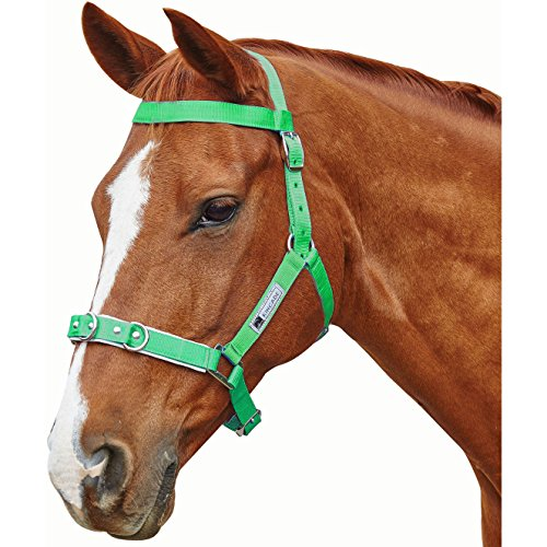 - Kincade Brights Nylon Padded Lunge Cavesson Full Size Lime