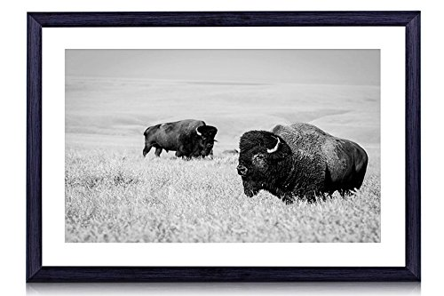 Bison - Art Print Black Wood Framed Wall Art Picture For Home Decoration - Black and White 24