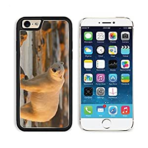 Polar Bear Stand Lights Large Apple iPhone 6 TPU Snap Cover Premium Aluminium Design Back Plate Case Customized Made to Order Support Ready Liil iPhone_6 Professional Case Touch Accessories Graphic Covers Designed Model Sleeve HD Template Wallpaper Photo Jacket Wifi Luxury Protector Wireless Cellphone Cell Phone