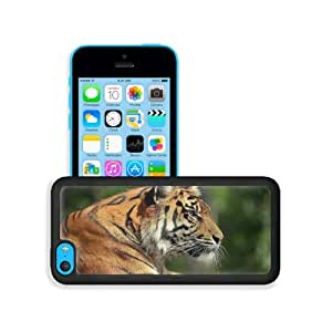 Artistic Animals Tigers Bengal Wild Apple iPhone 5C Snap Cover Premium Leather Design Back Plate Case Customized Made to Order Support Ready 5 inch (126mm) x 2 3/8 inch (61mm) x 3/8 inch (10mm) MSD iPhone_5C Professional Case Touch Accessories Graphic Cov