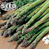 Mary Washington Asparagus Seeds - 50 Seeds Non-GMO