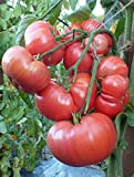Tomato Brandywine Pink-Potato Leaf 500 Seeds