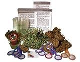 DuneCraft Dinosaur Plant Classroom Kit C by DuneCraft