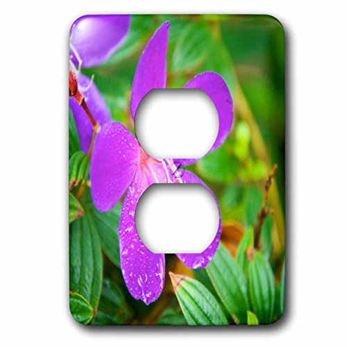 Tibouchina Urvilleana Princess Flower (Danita Delimont - Flowers - Sai Kung A Princess flower or Glory Bush. - Light Switch Covers - 2 plug outlet cover (lsp_225586_6))