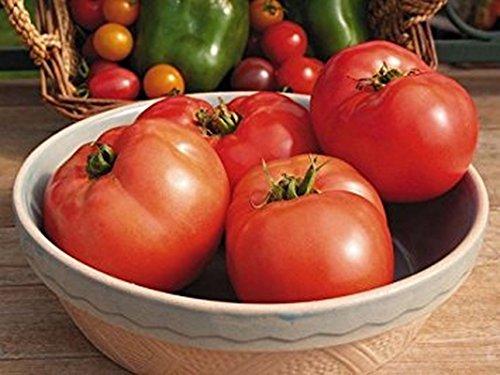 Jetsetter Tomato Seeds F1_ A medium-large, 8-10 oz. tomato Early maturing!!! (10 - Seeds) ()