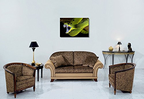 Snap Shot of a Snake Ready to Attack Wall Decor