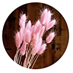 Color-Life-110-120Pcs-Dried-Natural-Flowers-Decoration-Pampas-Grass-Dried-Fox-Tail-Rabbit-Tail-Grass-for-Home-Party-Themed-Decorations18inPale-Pink