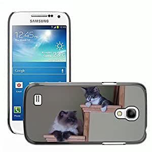 Hot Style Cell Phone PC Hard Case Cover // M00111967 Cat Staircase Kitten // Samsung Galaxy S4 Mini i9190