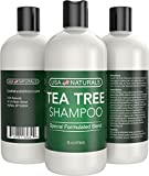 Tea Tree Oil Shampoo Sulfate-Free: Revitalize Hair, Combat Hair Loss and Cleanse Scalp with Naturally-Sourced Ingredients - Pure Tea Tree Oil, Organic Argan Oil, Organic Green Tea (Tea Tree Shampoo)