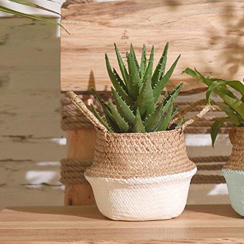 CapsA Seagrass Wicker Basket Flower Pot Folding Basket for Storage Home Decoration Laundry Picnic Plant Pot Cover (Seagrass Sorter Laundry)