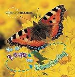 Von der Raupe zum Schmetterling, Kreislauf des Lebens